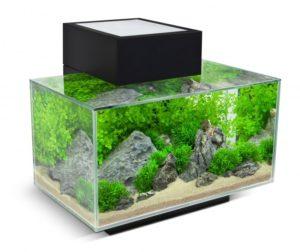 Obrázek akvária
